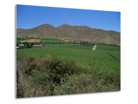 Grape Vines in the Valle De Elqui, Chile, South America-Aaron McCoy-Metal Print