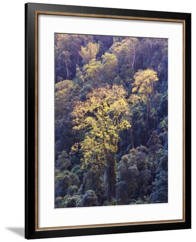 Rainforest Canopy, Springbrook National Park, Unesco World Heritage Site, Queensland, Australia-Jochen Schlenker-Framed Art Print