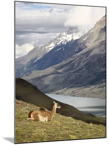Guanaco (Lama Guanicoe) with Mountains and Lago Nordenskjsld in Background, Chile, South America-James Hager-Mounted Photographic Print