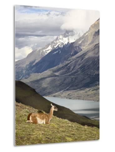 Guanaco (Lama Guanicoe) with Mountains and Lago Nordenskjsld in Background, Chile, South America-James Hager-Metal Print