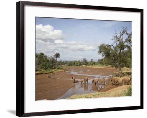 African Elephant Going to the Uaso Nyro River, Samburu National Reserve, Kenya, East Africa, Africa-James Hager-Framed Art Print