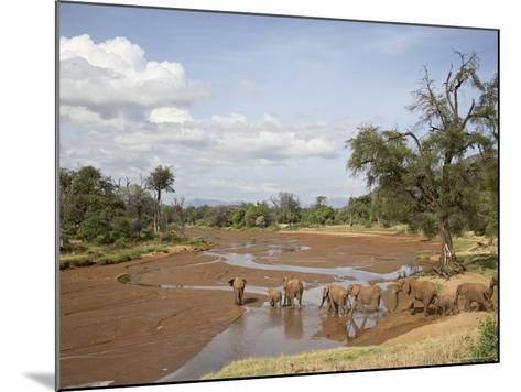 African Elephant Going to the Uaso Nyro River, Samburu National Reserve, Kenya, East Africa, Africa-James Hager-Mounted Photographic Print