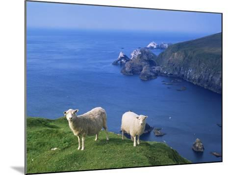 Sheep, Hermaness Nature Reserve, Hermaness, Scotland, United Kingdom-Patrick Dieudonne-Mounted Photographic Print
