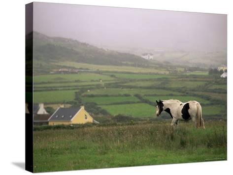 Tinker Horse Near Allihies, Beara Peninsula, County Cork, Munster, Republic of Ireland (Eire)-Patrick Dieudonne-Stretched Canvas Print