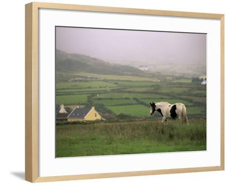 Tinker Horse Near Allihies, Beara Peninsula, County Cork, Munster, Republic of Ireland (Eire)-Patrick Dieudonne-Framed Art Print