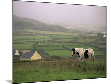 Tinker Horse Near Allihies, Beara Peninsula, County Cork, Munster, Republic of Ireland (Eire)-Patrick Dieudonne-Mounted Photographic Print