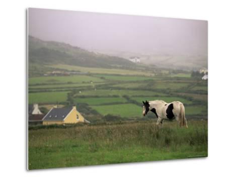 Tinker Horse Near Allihies, Beara Peninsula, County Cork, Munster, Republic of Ireland (Eire)-Patrick Dieudonne-Metal Print