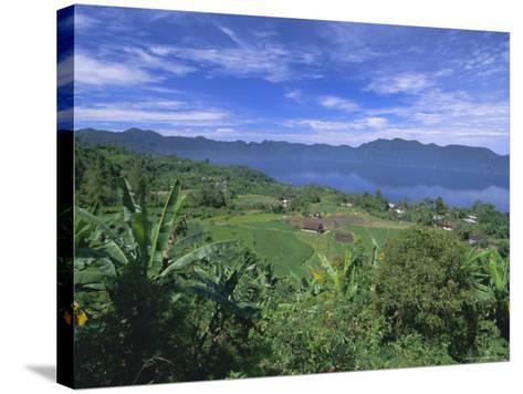 Rice Terraces on Eastern Shore of Crater Lake, Lake Maninjau, West Sumatra, Sumatra, Indonesia-Robert Francis-Stretched Canvas Print