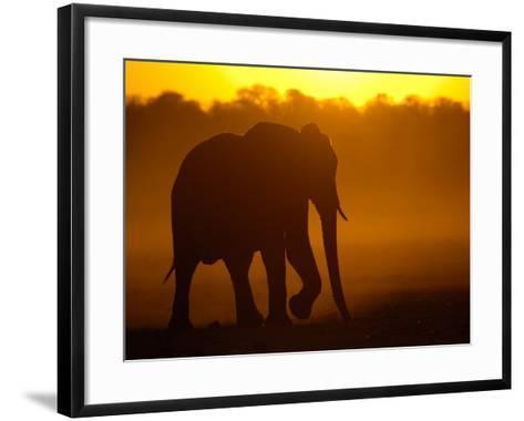 African Elephant at Sunset, Makalolo Plains, Hwange National Park, Zimbabwe-Pete Oxford-Framed Art Print