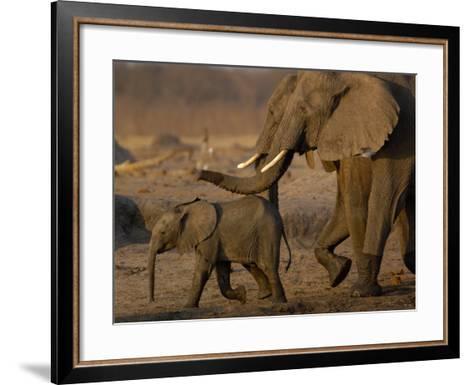 African Elephants, Makalolo Plains, Hwange National Park, Zimbabwe-Pete Oxford-Framed Art Print