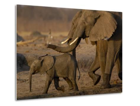 African Elephants, Makalolo Plains, Hwange National Park, Zimbabwe-Pete Oxford-Metal Print