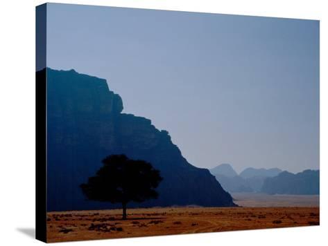 Lone Tree in Desolate Red Desert of Wadi Rum, Jordan-Cindy Miller Hopkins-Stretched Canvas Print