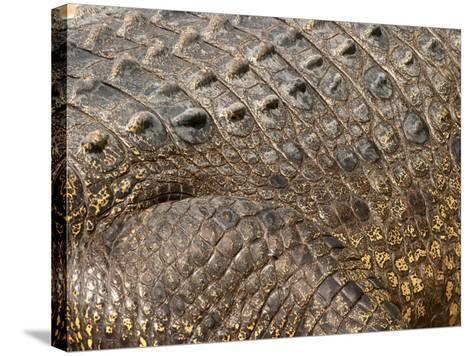 Detail of Crocodile Skin, Australia-David Wall-Stretched Canvas Print