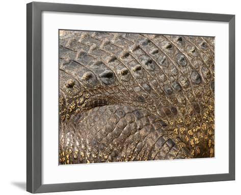 Detail of Crocodile Skin, Australia-David Wall-Framed Art Print