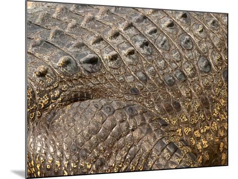 Detail of Crocodile Skin, Australia-David Wall-Mounted Photographic Print