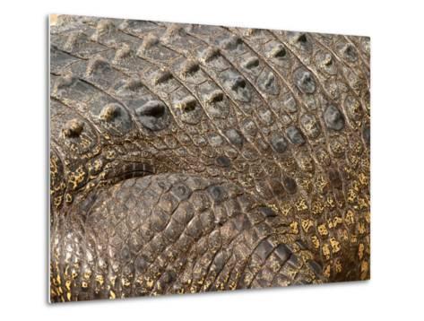 Detail of Crocodile Skin, Australia-David Wall-Metal Print