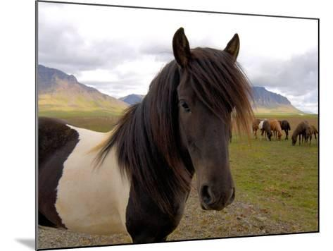 Icelandic Horses, Iceland-Lisa S^ Engelbrecht-Mounted Photographic Print