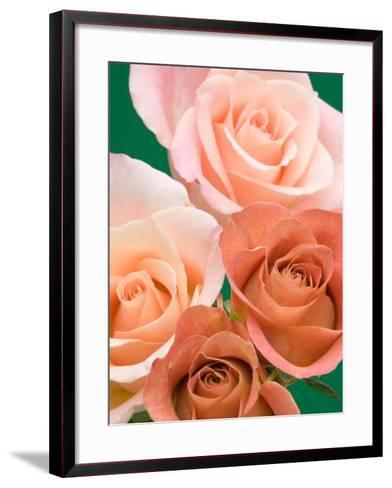Roses-Jamie & Judy Wild-Framed Art Print