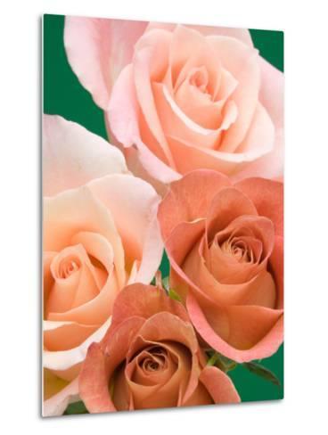 Roses-Jamie & Judy Wild-Metal Print