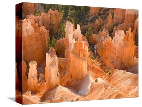 Hoodoos in Bryce Canyon from Inspiration Point, Bryce Canyon National Park, Utah, USA-Jamie & Judy Wild-Stretched Canvas Print