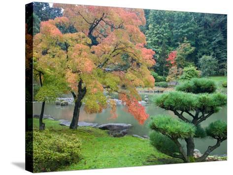 Autumn Color at the Japanese Garden, Washington Park Arboretum, Seattle, Washington, USA-Jamie & Judy Wild-Stretched Canvas Print