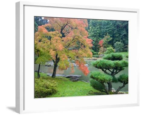 Autumn Color at the Japanese Garden, Washington Park Arboretum, Seattle, Washington, USA-Jamie & Judy Wild-Framed Art Print