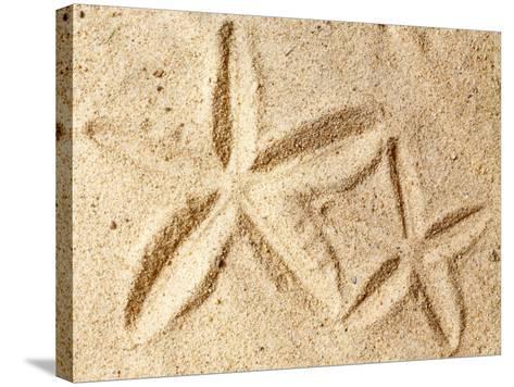 Starfish Imprints--Stretched Canvas Print
