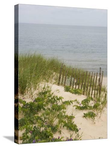 Sandy Dune with Vetch and Grasses--Stretched Canvas Print