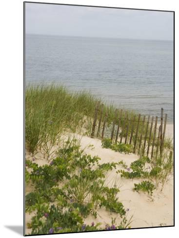 Sandy Dune with Vetch and Grasses--Mounted Photo