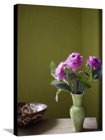 Olive Ambiance, Plum Dahlias--Stretched Canvas Print