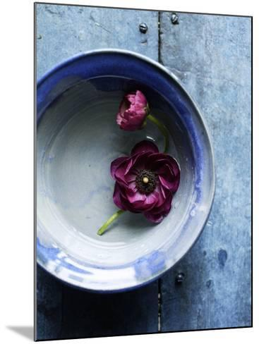 Small Blue Bowl, Two Flowers--Mounted Photo