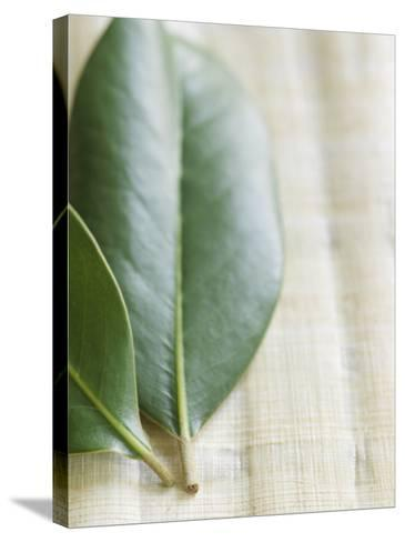 Magnolia Leaves II--Stretched Canvas Print