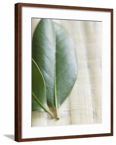 Magnolia Leaves II--Framed Art Print