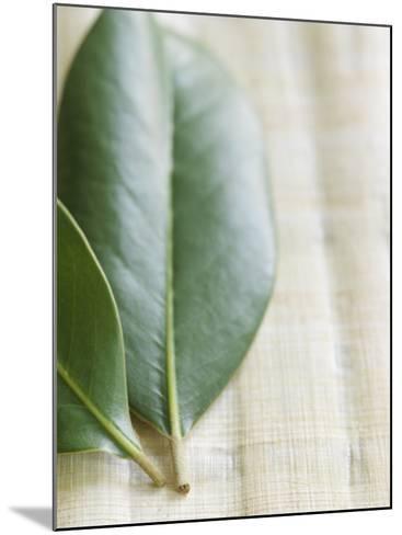 Magnolia Leaves II--Mounted Photo