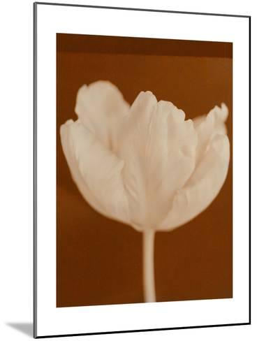Tulip Serenity--Mounted Photo