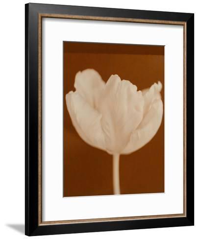 Tulip Serenity--Framed Art Print