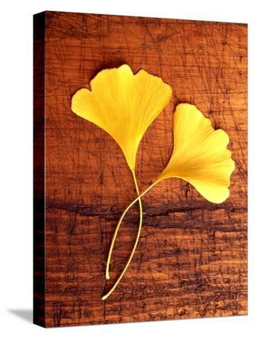Yellow Ginkgo Leaves--Stretched Canvas Print