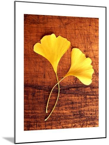 Yellow Ginkgo Leaves--Mounted Photo