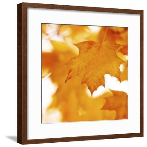 Autumn Leaves in Soft Sunshine II--Framed Art Print