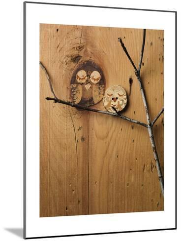 Wood Owl Knots--Mounted Photo