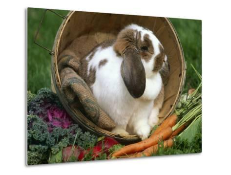 French Lop Eared Rabbit in a Tub-Lynn M^ Stone-Metal Print