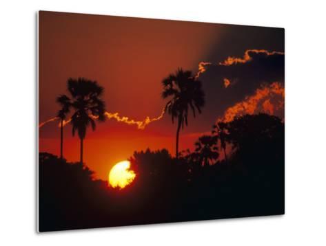 Palm Trees Silhouetted at Sunset, Okavango Delta, Botswana-Pete Oxford-Metal Print