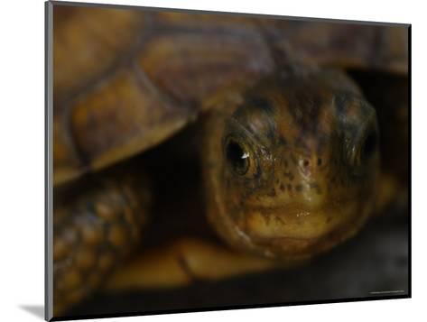 Close View Shows a Box Turtle-Stephen Alvarez-Mounted Photographic Print