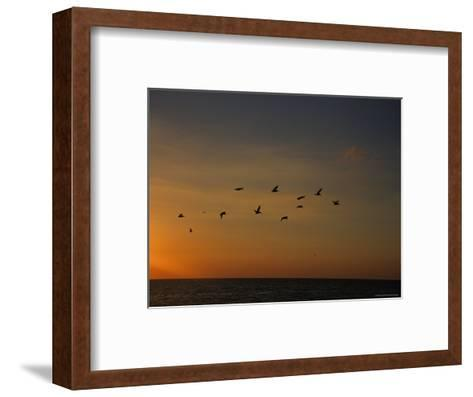Birds Fly into the Wind above the Gulf of Mexico's Warm Water, Holmes Beach, Florida-Stacy Gold-Framed Art Print