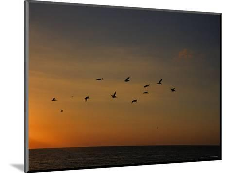 Birds Fly into the Wind above the Gulf of Mexico's Warm Water, Holmes Beach, Florida-Stacy Gold-Mounted Photographic Print