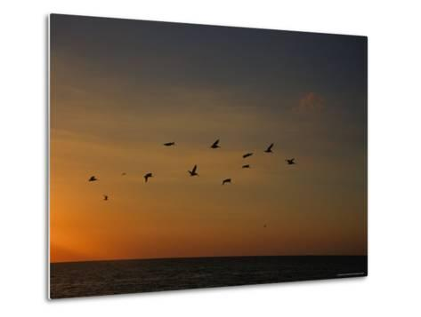 Birds Fly into the Wind above the Gulf of Mexico's Warm Water, Holmes Beach, Florida-Stacy Gold-Metal Print