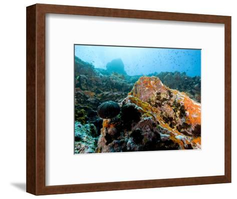 Colorful Underwater Scene, Fatu Hiva Island, French Polynesia-Tim Laman-Framed Art Print