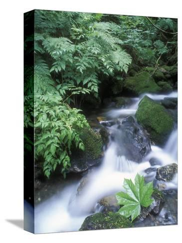 Clean Water Creek Flowing Through Forest Greenery, Alaska-Rich Reid-Stretched Canvas Print