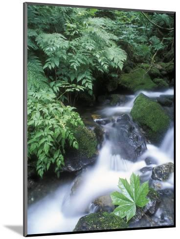 Clean Water Creek Flowing Through Forest Greenery, Alaska-Rich Reid-Mounted Photographic Print