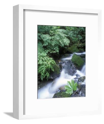 Clean Water Creek Flowing Through Forest Greenery, Alaska-Rich Reid-Framed Art Print
